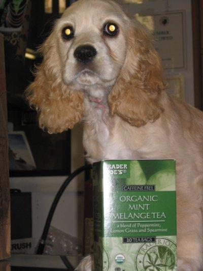 Trader Joe's Mint Melange Tea – Ghost Dog Approved