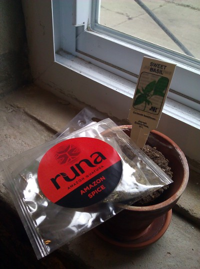 Runa Guayusa Amazon Spice &#8211; Wild Like a Bar Mitzah
